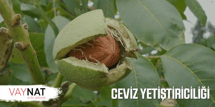 Photo of Ceviz Yetiştiriciliği Devlet Desteği 2019
