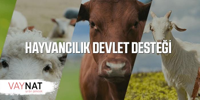 Photo of Devlet Destekli Hayvancılık Kredisi Nasıl Alınır?