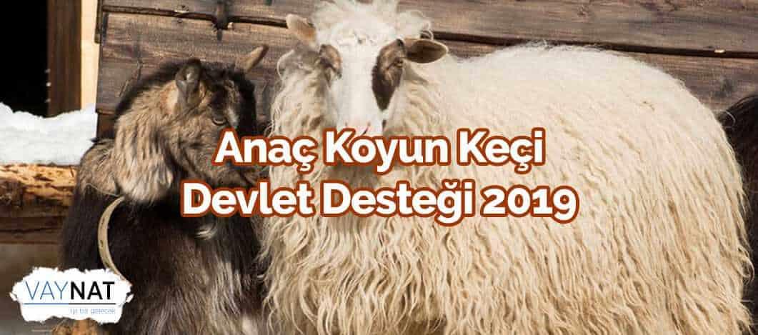Anaç Koyun-Keçi Devlet Desteği 2019