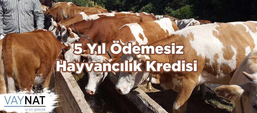 5 Yıl Ödemesiz Hayvancılık Kredisi