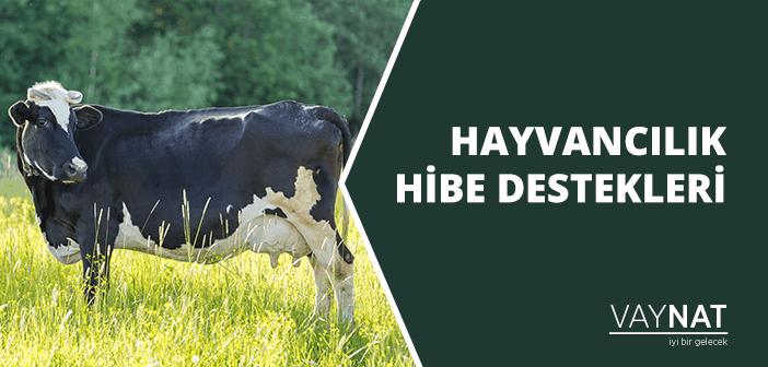 Hayvancılık Hibe Destekleri Nelerdir?